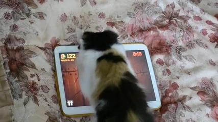 Котка играе Fruit Ninja на таблет