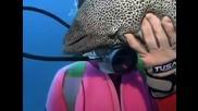 Жена леководолаз се сприятелява и храни изключително зловеща и опасна змиорка (морена)!