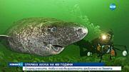 Откриха акула на 400 години