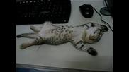 Сладко котенце спи на бюрото!