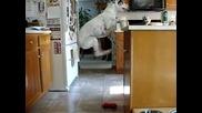 Куче хвърля по един поглед на храната си докато я чака