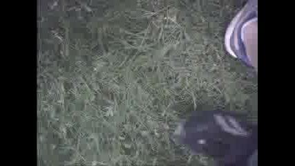 Пиаджо Дере Тревата