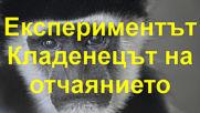 Експериментът Кладенецът на отчаянието - 1960 г.