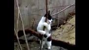 * До Сега * Котка прави стрийптиз ( Смях )