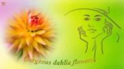 Красивото цвете Далия! ...