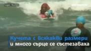 Кучета на сърф и небе от балони