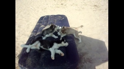 moite bebeta na plaja