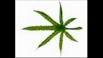 Marihuana2 Ot Hristodr