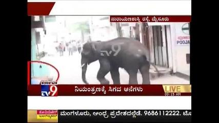 Слонове убиват хора