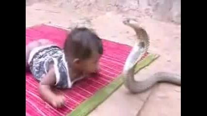 бой между бебе и змия кобра