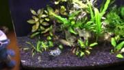Моите пораснали риби (след около 3 месеца)