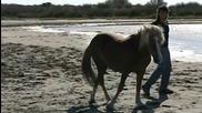 Mustang Sally - Chris Norman