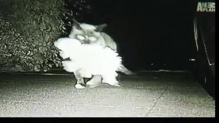 Котката крадец