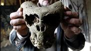 Мистерии: Странен череп намерен в Русия