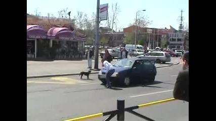 Не свири когато има куче пред колата ти