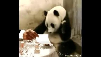 Панда се плаши от сметката ^^