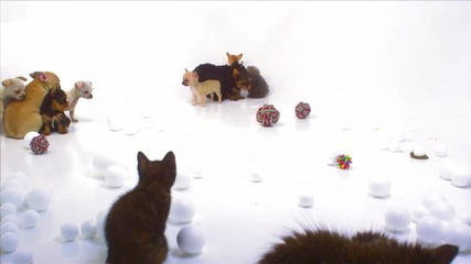 Много сладки котенца и кученца (2 част)