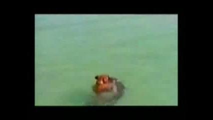Куче Срещу Акула