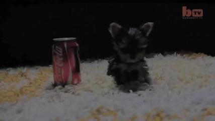 Най-малкото кученце в света