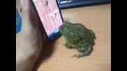 Как да вбесите жаба