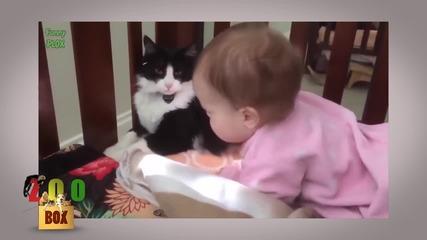 Бебета feat. домашни любимци