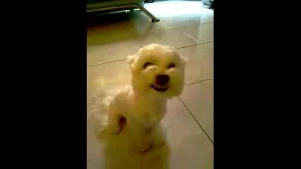 Мъничко кученце се смее