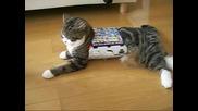 Луда котка се заклещва във кутия