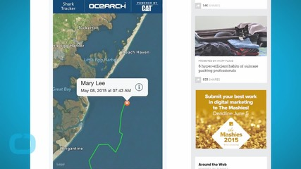 Meet Mary Lee! The Great White Shark Tweets Off the Jersey Shore!