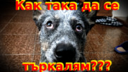 Кучешки трик: научете го да се търкаля!