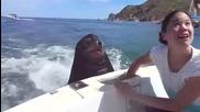 Тюлен се вози на лодка