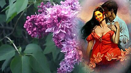 """Ансамбль """" Осенняя Роса"""" - Цветет Сирень У Дома Нашего. Красивая цыганская песня!"""