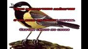 Песента На Врабчето караоке - детски песнички