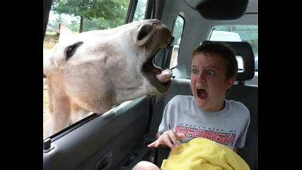 Most Funny Pics In The World