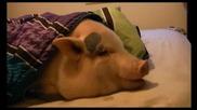 Уш спи , ама надуши бисквитката !