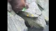 Удивително ! Орангутан спасява давещо се птиче