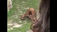 Маймуна Си Пикае В Устата
