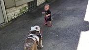 Бебе се опитва да разходи огромното си куче