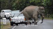 Слонове срещу автомобили, национален парк khao yai, Тайланд