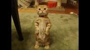 Мн яко котенце
