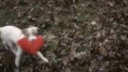 ---повярвай в любовта - All things Valentine -_2016-_ - Бг аудио - Youtube