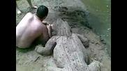 Крокодил в река Арда