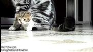 Сладки Котета Палуват - Смях