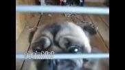лудо kучe