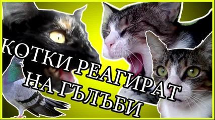 Реакции на котки щом видят гълъби |BTW