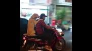 Куче се вози на скутер като човек 2