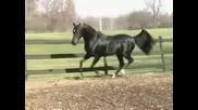 Коне / Horses