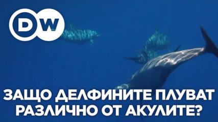 Защо делфините плуват по различен начин от акулите?