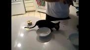 Така Котките си изкарват Хляба