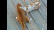 Котешки двубой на ламарина 2 - ра част