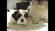 Сладки Кучета